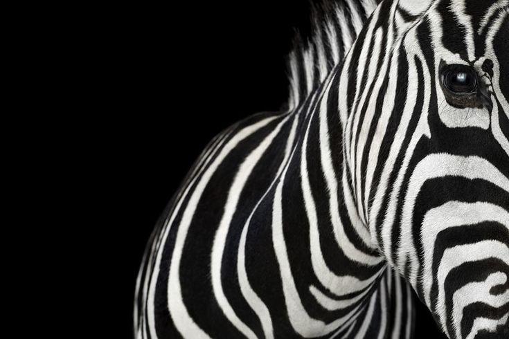NewPix.ru - Студийные портреты животных от Brad Wilson