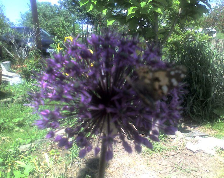 arici floral....