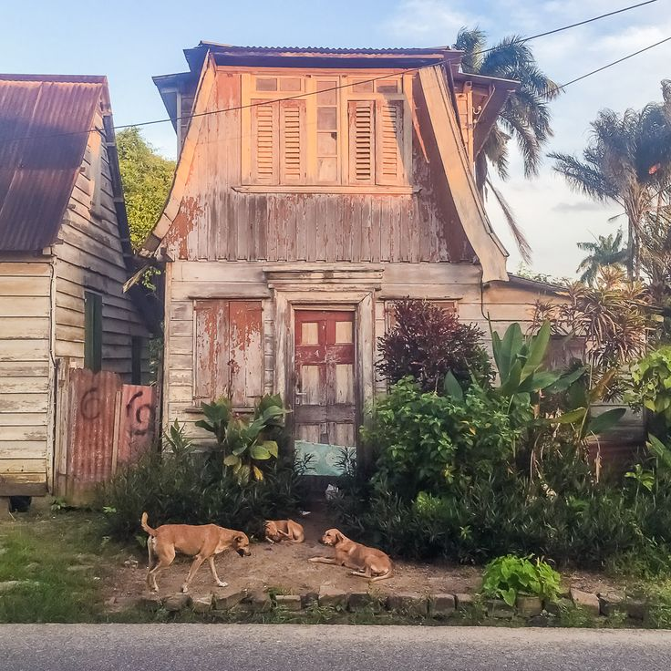Travel Off the Path: Suriname