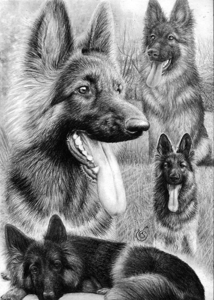 German Shepherd Collage by Yankeestyle94 on DeviantArt