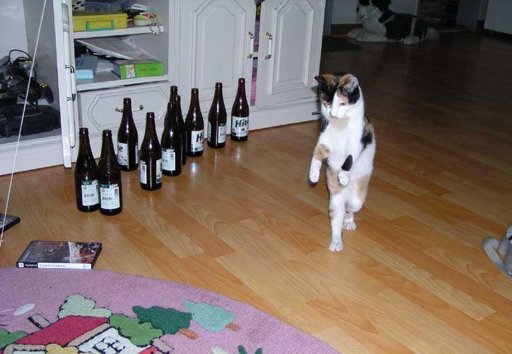 룻휘의 잉여세상 :D :: 웃긴 고양이 사진모음