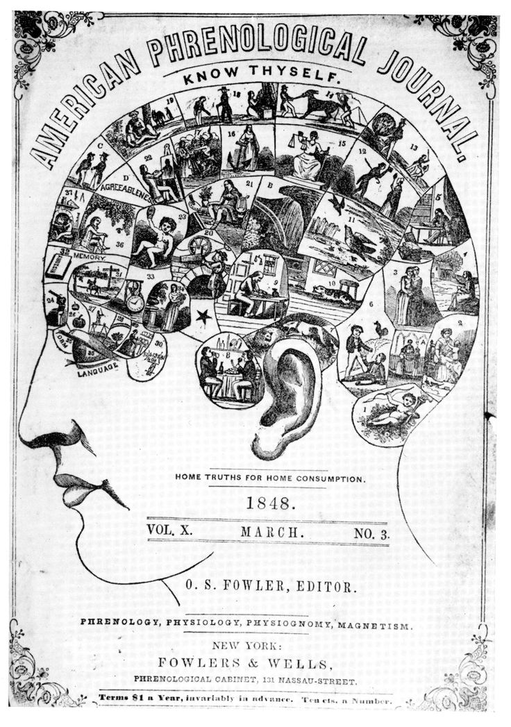 Phrenology is the Victorian pseudoscience that determined a person's character and mental capacity based on the measurements of their skull