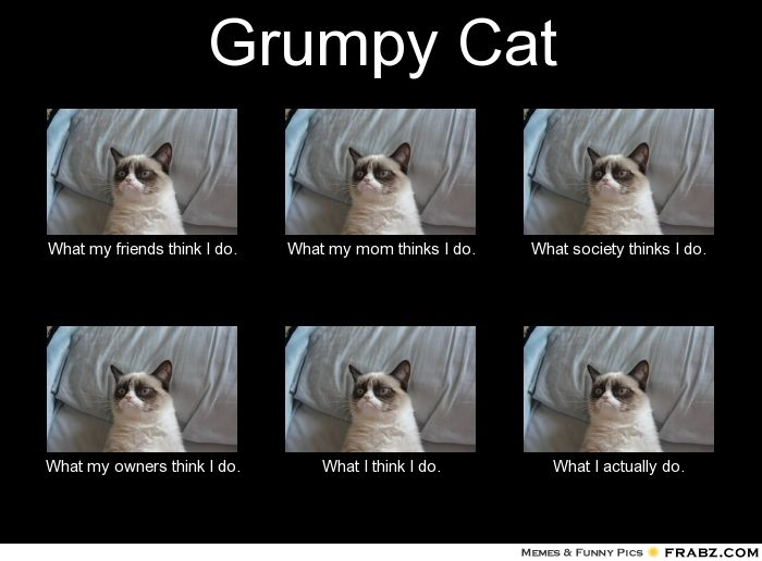 ee79a734caad4fe4069d034c6cccc4ff funny grumpy cats grumpy kitty best 25 grumpy cat meme generator ideas on pinterest no grumpy,What My Parents Think I Do Meme Maker