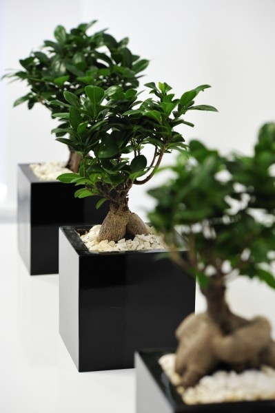 21 best Plants for Office Screening images on Pinterest Office