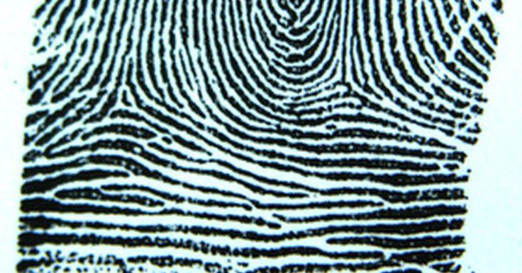 Cómo habilitar una huella digital única de inicio. Los lectores de huellas digitales son dispositivos biométricos que permiten el acceso a una computadora a través del uso de una huella digital aprobada. El lector es una opción que los usuarios pueden agregar para incrementar el nivel de seguridad de acceso. Muchas computadoras tienen lectores de huellas digitales incorporados, pero también es ...