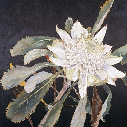 White Waratah-Cropped - Cressida Campbell, n/d Australian, b.1960- Carved woodblock, hand painted in watercolour pigment , 51.5 x 57.0 cm block