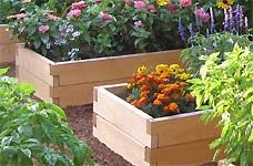 lots of info re: raised bedsGardens Beds, Gardens Ideas, Gardens Boxes, Raised Gardens, Raised Beds, Rai Gardens, Rai Flower Beds, Vegetables Gardens, Rai Beds