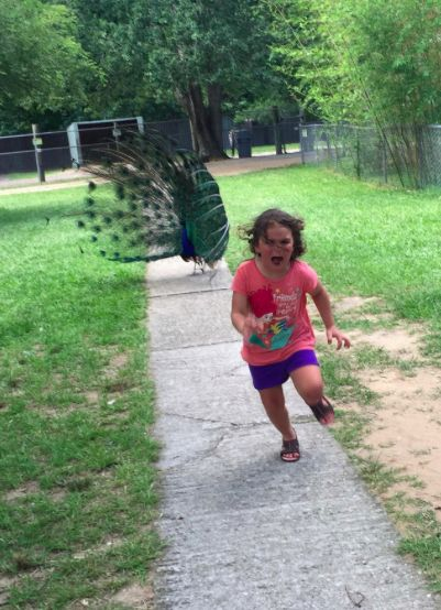 This Little Girl's Encounter With a Peacock Sparked a Hilarious Meme Battle   Parents