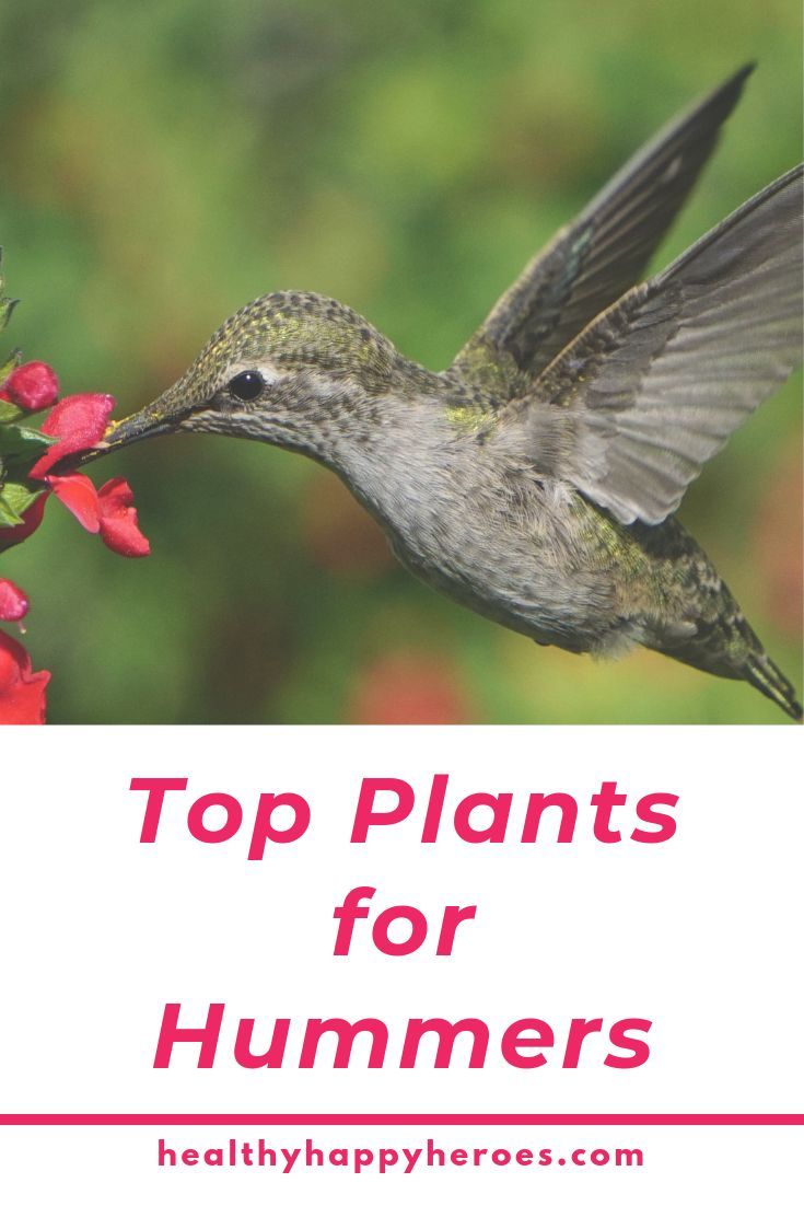 Top Flowers For A Hummingbird And Butterfly Garden With Images Butterfly Garden Plants Hummingbird Garden