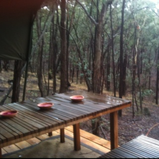 View from one of the Eco tent decking, up in the trees.