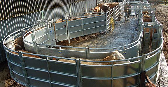 cattle handling equipment | Cattle handling systems