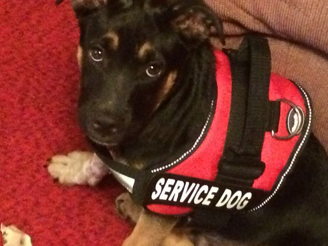 How to Train Your Service Dog Without a Professional Trainer