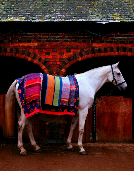 .: Beautiful Horses, Stylish Horses, Style, Natural Beautiful, Inspiration Anything, Interiors, Colors, Nature Beautiful, Beautiful Creatures