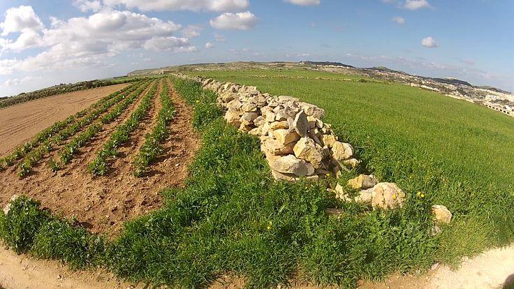 optionfeb15 #segway #tour #gozo #malta #eco #sightseeing