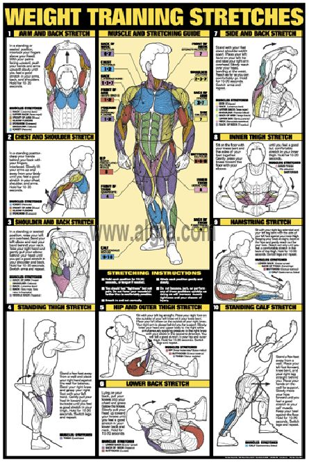 the workout stretches poster is vital for any gym for