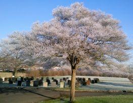 tree6.jpg (263×205)
