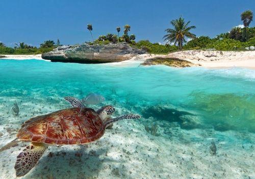 Under the water 🌊 shared by Lucia on We Heart It #summer #water #sea #tortoise #turtle #underthesea #palms #summer #beach #beach #random #amazing #FF #photooftheday