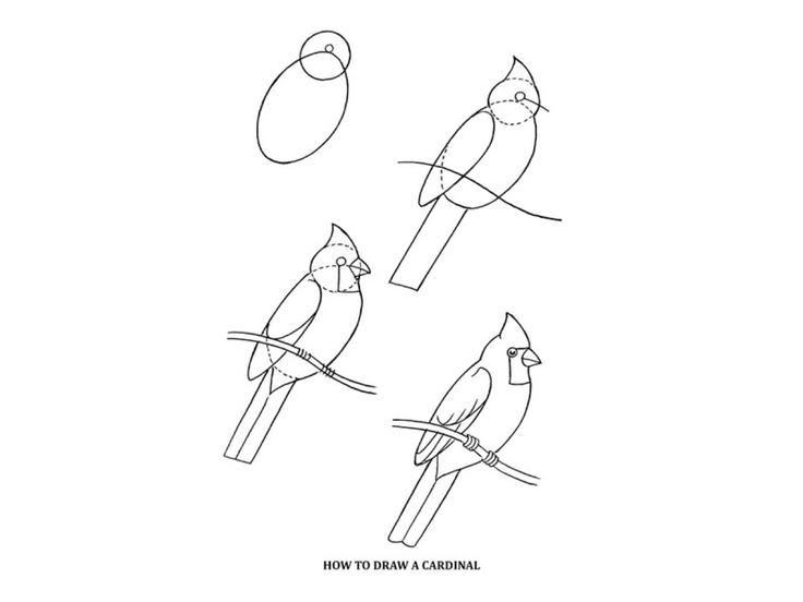 72 best Birds: Art Projects for Kids images on Pinterest
