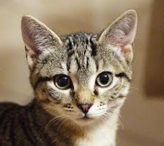 Mi sono innamorato  di te un mattino.  Avevi gli occhi di un gatto  incisivo, aspetto  del portamento elegante.