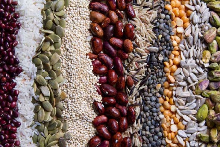 Food and beverage industry trend toward alternative sources of protein