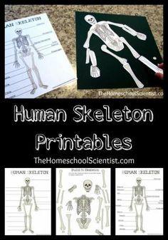 FREE Human Skeleton Printables
