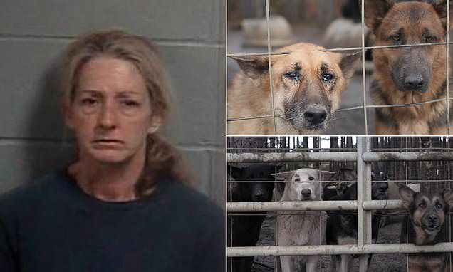 Georgia Woman Arrested After 450 Neglected German Shepherds Are