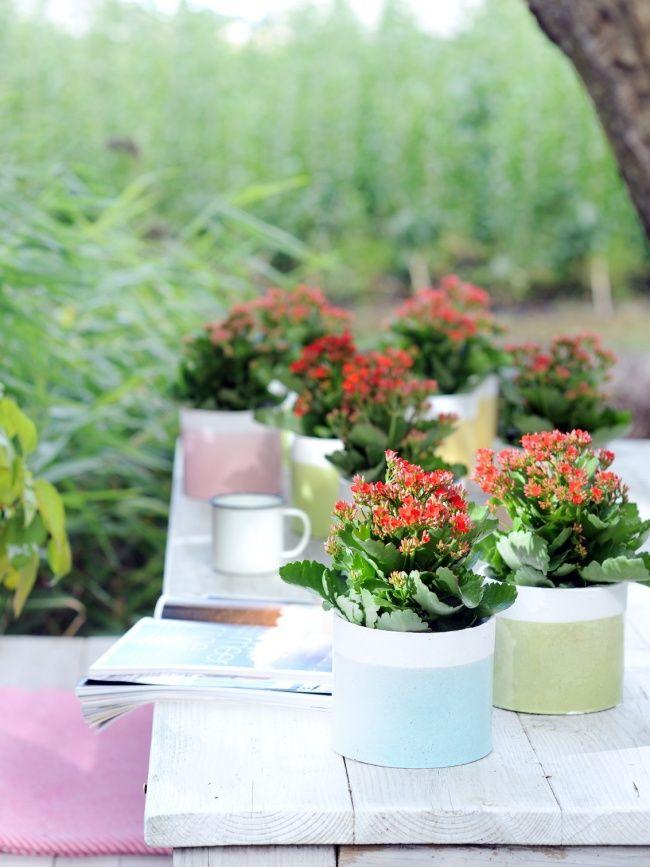 Enspannte Sommerstimmung mit der Kalanchoë im Garten #pflanzenfreude #pflanze #pflanzen #plants #planters #garten #draußen #outdoor #kalanchoe #plant