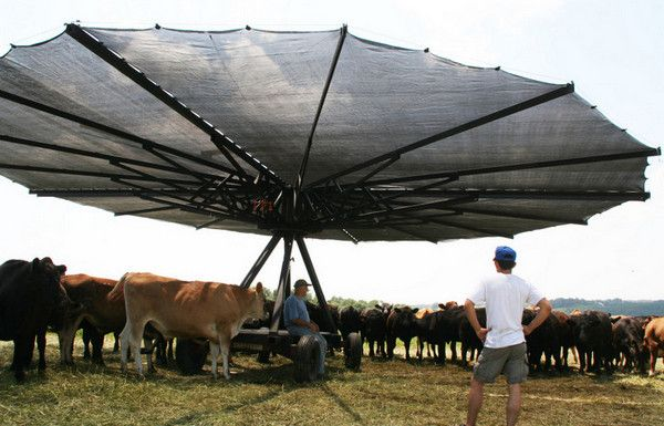 Shade Haven Portable Shade for Cattle http://www.simplifiedbuilding.com/blog/keep-your-cows-cool-with-this-portable-device/ #agriculture #industrialpipe #keeklamp