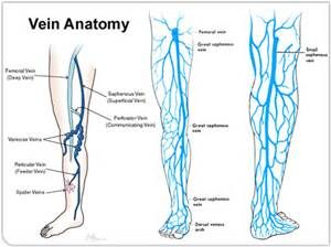how to get rid of ugly veins in legs