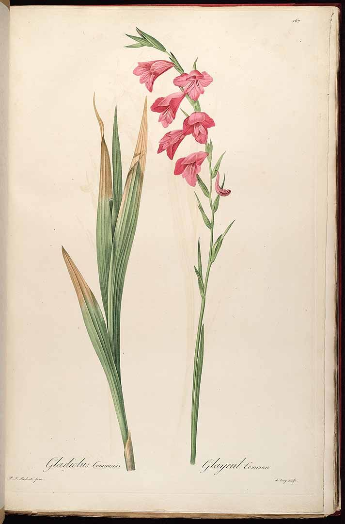 Best 25 Gladiolus Flower Tattoos Ideas On Pinterest