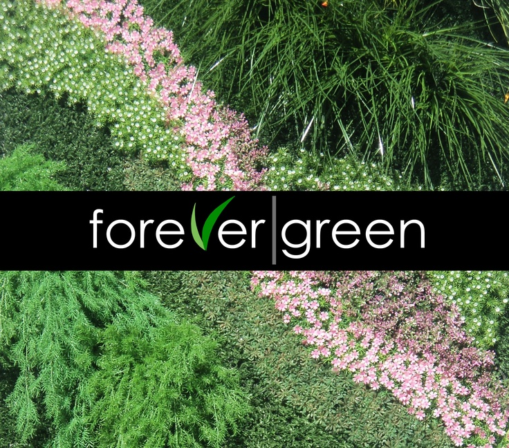 Detalle de muestra de muro verde donde se aprecian - Tipos de muros ...