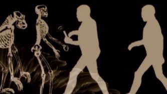 A evolução das espécies através da seleção natural