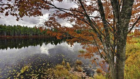 ノバスコシア州の素敵な秋の湖 屋上緑化 自然 高解像度で壁紙
