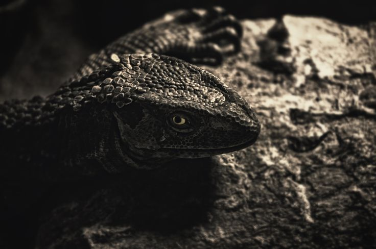 Lizzy Staring by TasosKDs on 500px
