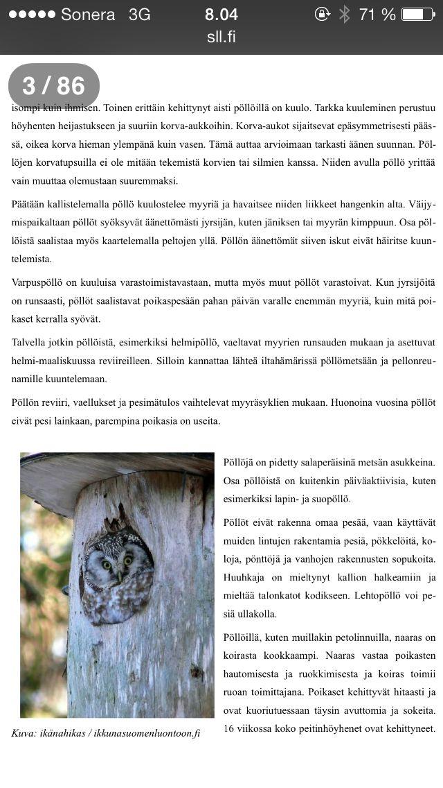 Pöllöt 2