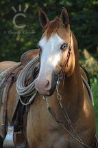 2249 best horse colors images on pinterest