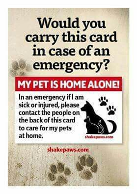 MY PET IS HOME ALONE! I'n an emergency if I'm Sick or injured, please Contact…