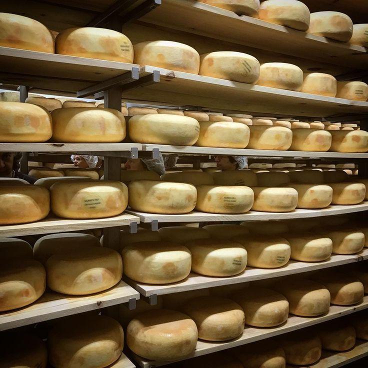 Aging room at Gunn's Hill Artisan Cheese