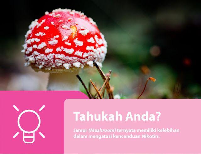 Manfaat Majic Mushroom untuk Kesehatan Anda