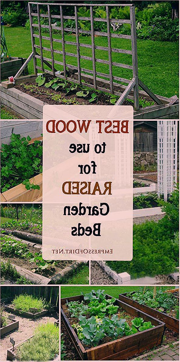 What is the best wood to use for raised garden beds and