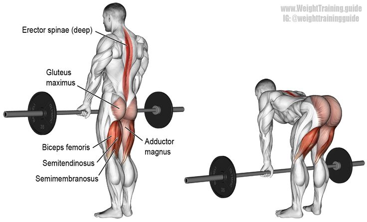 Barbell straight back stiff leg deadlift. An isolation exercise. Target muscle: Gluteus Maximus. Synergistic muscles: Hamstrings (Biceps Femoris, Semimembranosus, Semitendinosus) and Adductor Magnus. Important stabilizers: Erector Spinae.