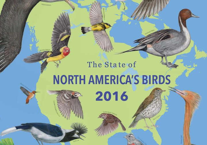 State of North America's Birds 2016   eBird