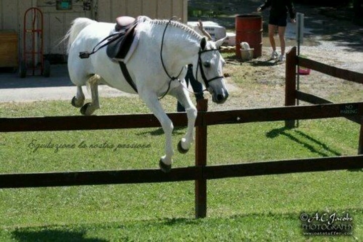 20 Best Show Jumping Images On Pinterest Show Jumping