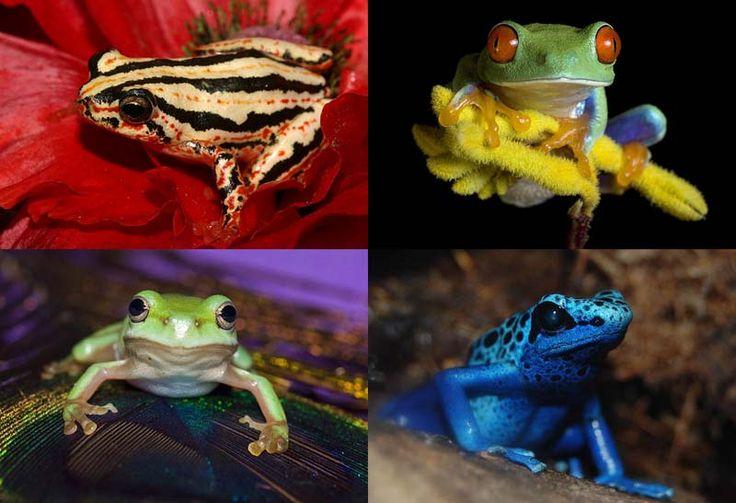 Несколько фактов о лягушках (26 фото)