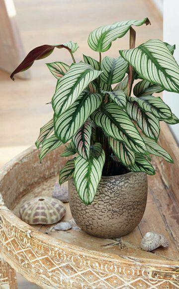 Die Top 10 der Grünpflanzen fürs Zimmer