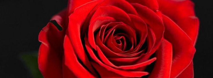 Beautiful RSD  ROSE ON BLACK BACKGROUNDTimeline Covers for Facebook | Red Rose Facebook Cover