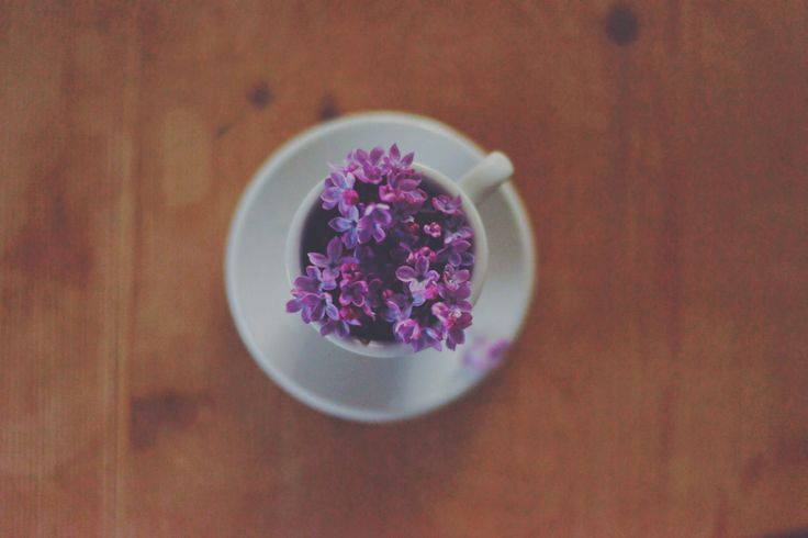 cup of spring,flower,beautiful
