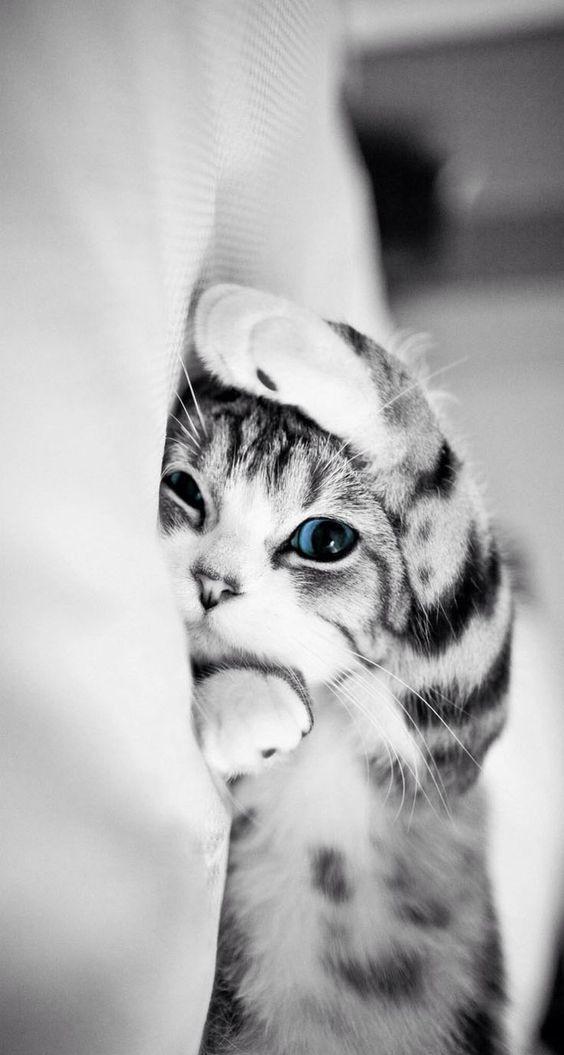 Die 100 süßesten Katzenbilder aller Zeiten in der Welt