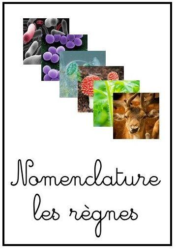Montessori Anonymes 6- 12 ans: Les six règnes