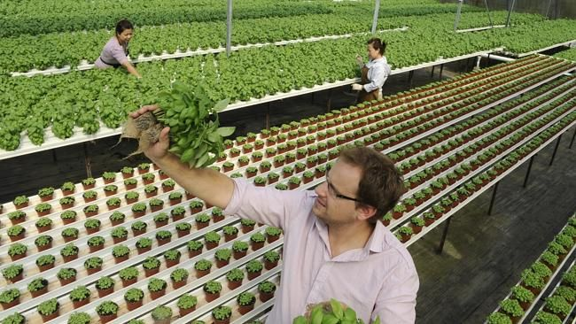 A CLYDE herb farm will receive a $430,000 interest-free loan from the Coles Nurture Fund to build a state-of-the-art hydroponic greenhouse and invest in sustainable farming methods.